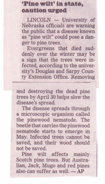 Omaha World Herald article about pine wilt. Call American Arborist to see if your trees are infected.