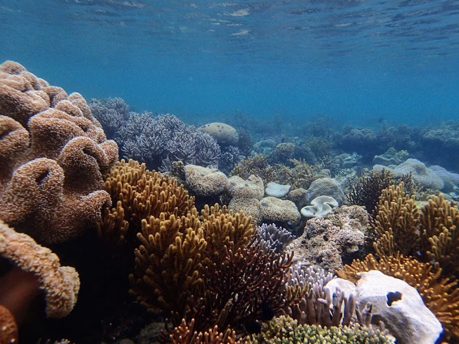 Lusong Island, Coral Garden Reef, Palawan, Philippines.