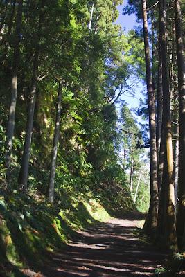 El camino entre árboles