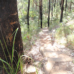 Steps on the Flannel Flower Track (202459)