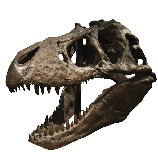 Megalania vs marsupial lion - photo#13