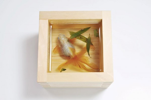 Золотые рыбки художника Riusuke Fukahori. 11 фото
