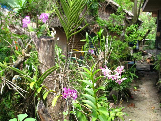 Из зимы в лето. Филиппины 2011 - Страница 5 IMG_0052