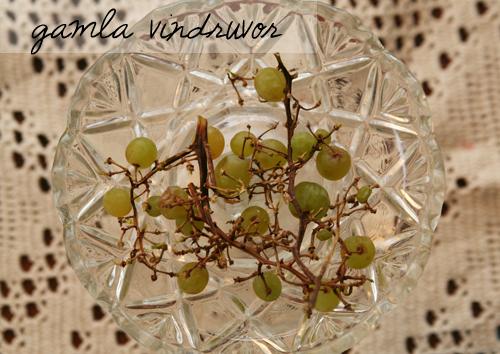 gamla vindruvor