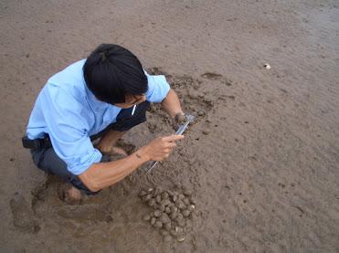 Hiện trạng phát triển nghề nuôi loài nhuyễn thể hai mảnh ở ven biển Hải phòng và các yếu tố ảnh hưởng đến năng suất