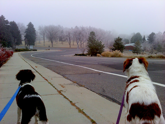 Boulder and Torrey out for a foggy walk at Pioneer Park