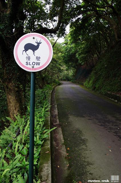 小心有鹿出沒!