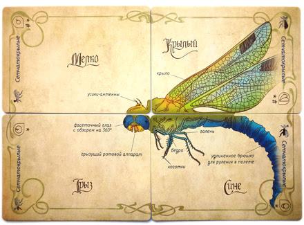 Познавательная обучающая настольная игра для детей веселая генетика изучаем насекомых
