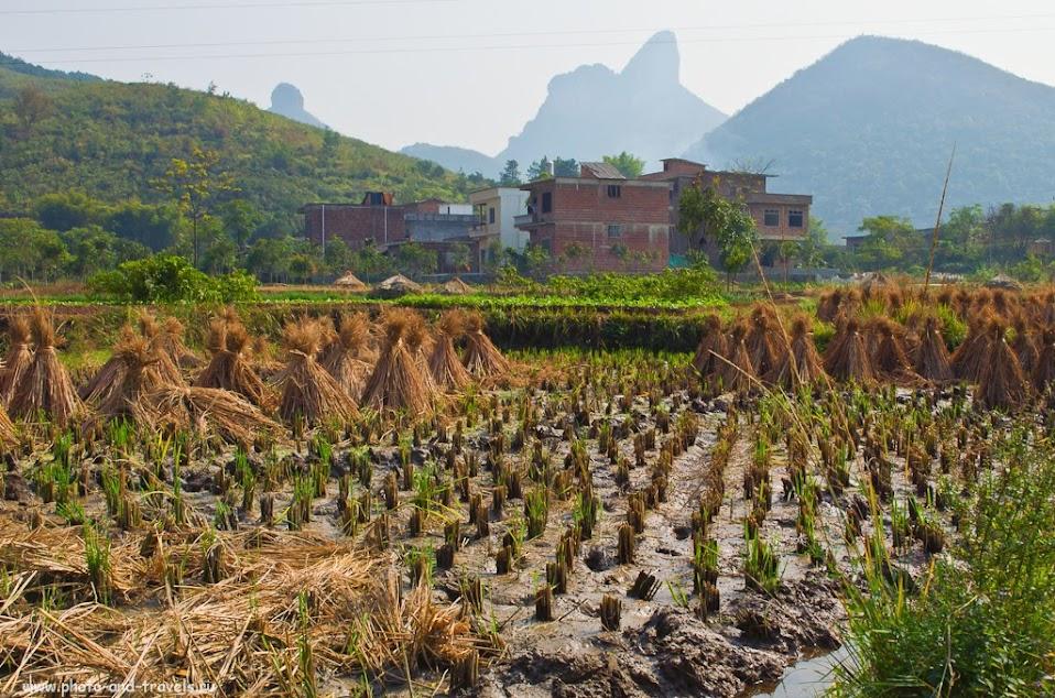 Рис уже убрали и отправили в Россию. Поездка на отдых в Китай самостоятельно. Окрестности деревни Яншо.