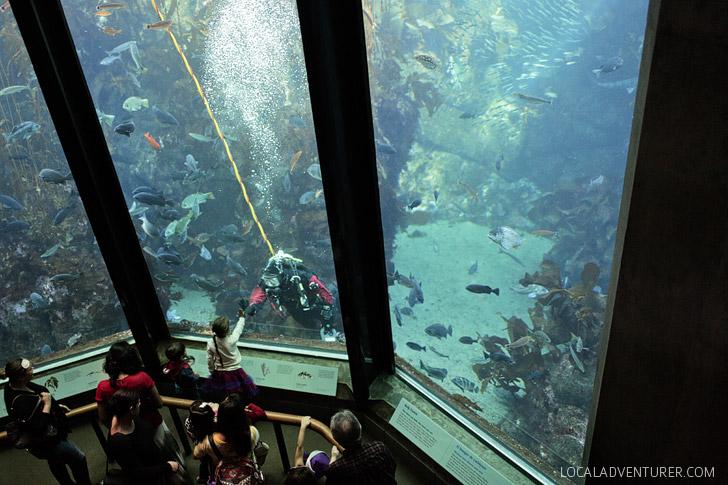 Kelp Forest Monterey California Aquarium
