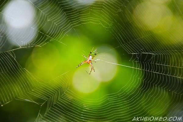 labah-labah
