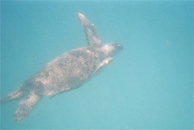 Quelque mètres d'une eau limpide et des tortues