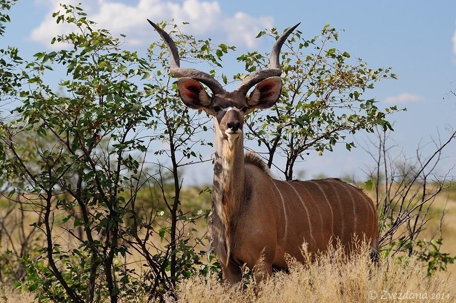 Namibia+2014_104.JPG