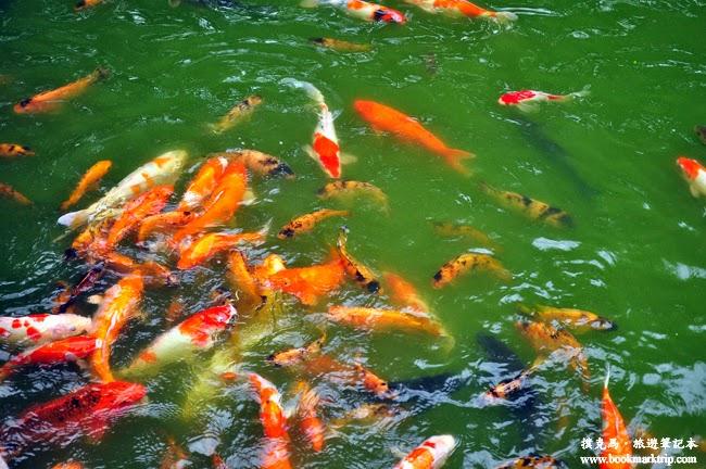 溪湖糖廠園區水態池