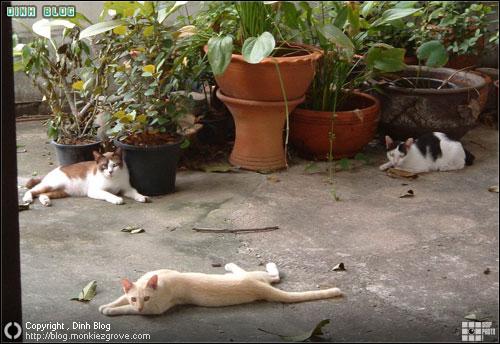 จุ๊บ แมวเพื่อนบ้าน ตัวใหญ่ ในสวนบ้านเก่า