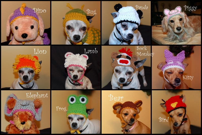 Free Crochet Chihuahua Dog Sweater Pattern | Dog Breeds Picture