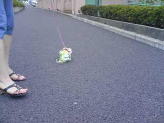 お散歩デビューのまるごーちゃん