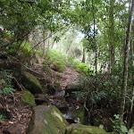 Berowra track (118306)
