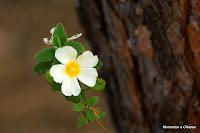 Resultado de imagem para flor silvestre natureza