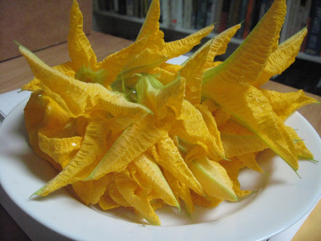Zucchini Flower Blossom Fritters