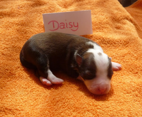 Daisy kurz nach der Geburt
