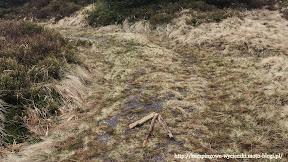 na zdjęciu widzimy strzałkę z gałęzi kierująca na szczyt Wysokiej Kopy