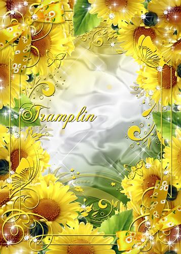 Рамка для фото – Хризантемы желтые – солнышка сияние