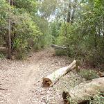 GNW meets the Bar Trail (364052)
