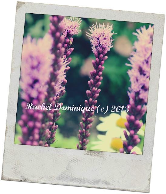 Purple stick like bloom