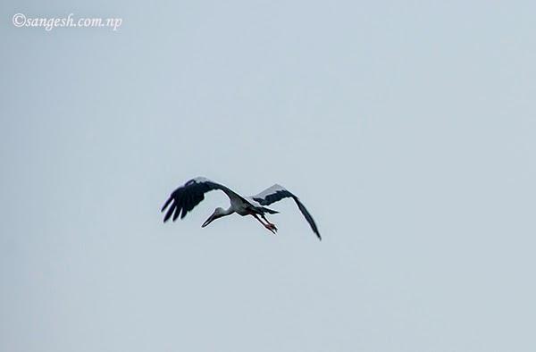 Bird in the Chitwan National Park