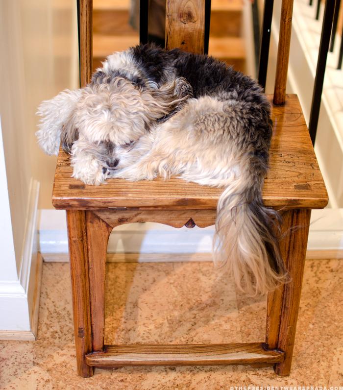 The shop dog at Hu's Wear