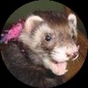 furzy mouse