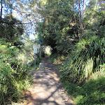 Bushwalking in Mosman (258155)