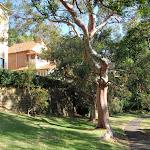 Interesting trees and homes along this bushwalk (258878)