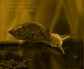 Смотри улитка,snail reflection