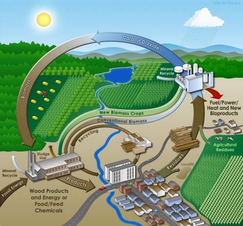 Pros And Cons Of Using Biomass Energy Image