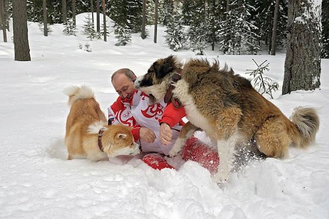 プーチン大統領に牙をむくゾッフィー(あまえんぼう)
