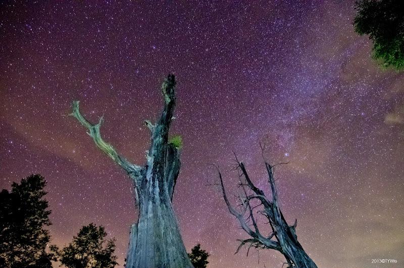 塔塔加夫妻樹