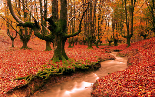 Autumn Red Forest Trees