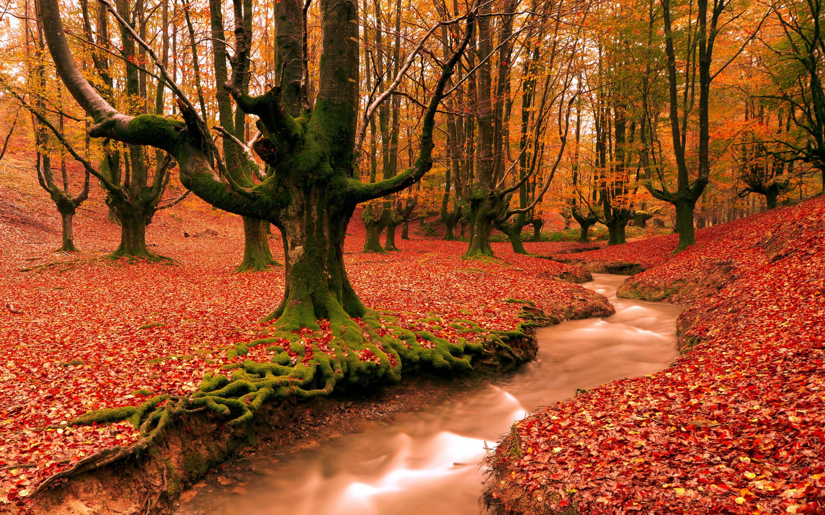 Autumn Red Forest Trees Wallpapers Hd Wallpapers
