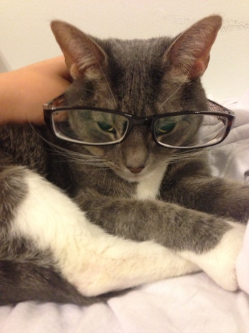 Professor kitty