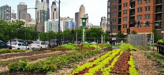 Растущие города / Growing cities