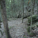 Approaching the Lyrebird Trail (366116)