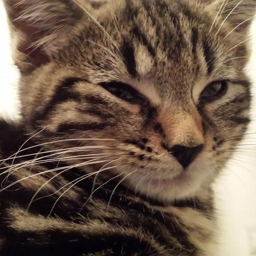Baxter's Face