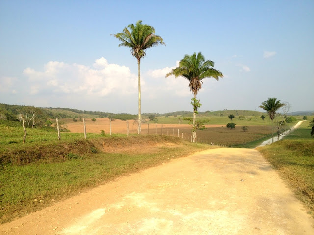 The Road to Clarissa Falls, Belize