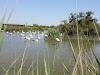 Parc Ornithologique du Pont de Gau (Pont du Gau Ornithological Park)