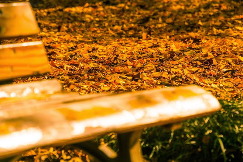 新宿御苑 紅葉 写真12
