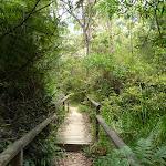 Boardwalk north of Avondale Creek (393650)