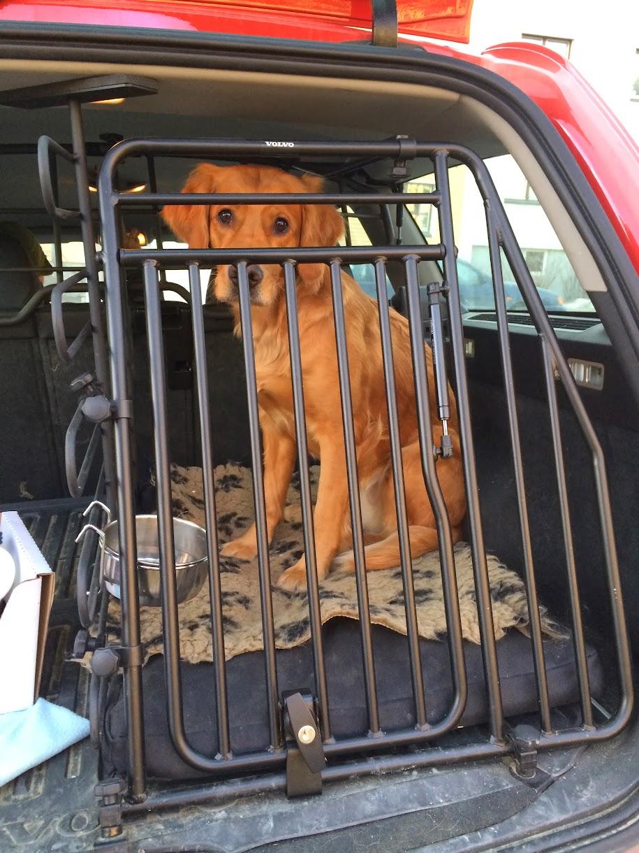 Scala sitter i bilburet