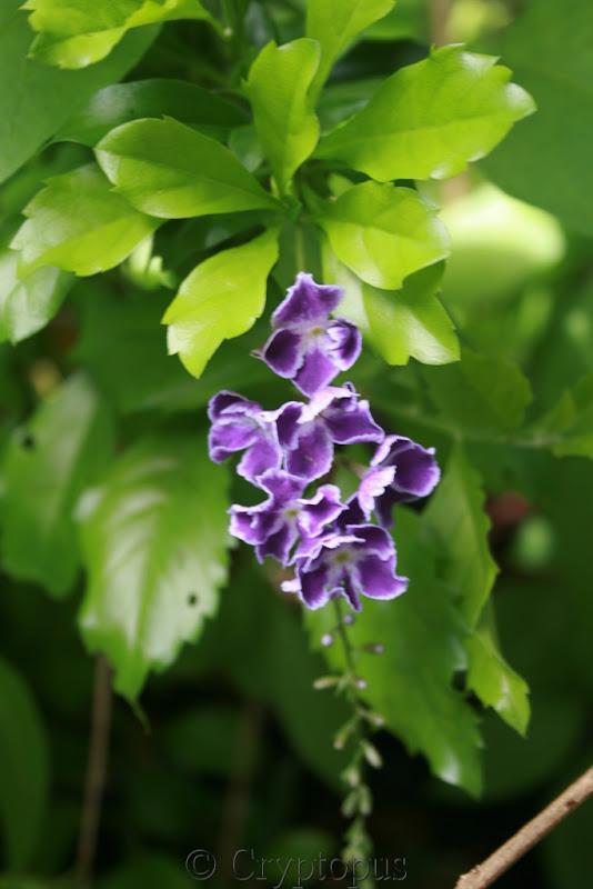 Futur jardin d'orchidées!!! - Page 2 IMG_3656